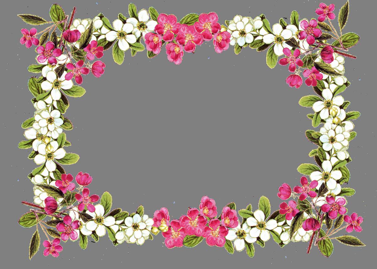 Floral Frame PNG HQ Photo