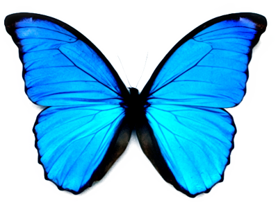 Butterfly Transparent Background PNG