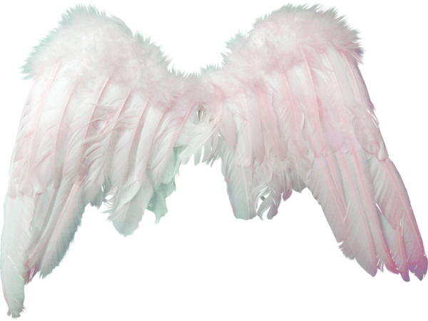 White Angel Wings Transparent Image