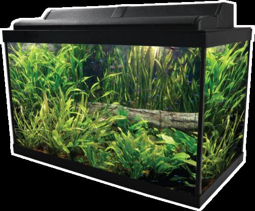 Aquarium PNG Image