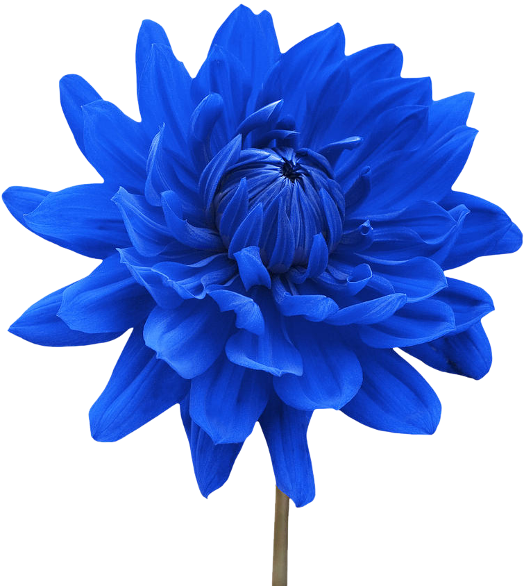 Vector Blue Flowers PNG Clipart Background